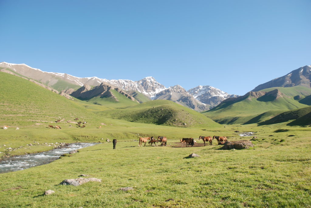 Meadow of Kamandy in the valley of Naryn